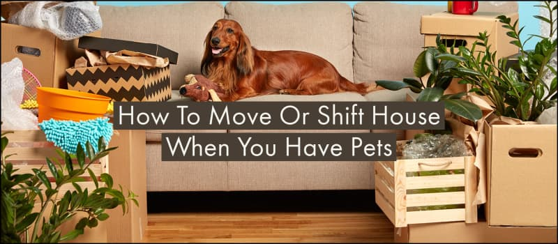How To Move Or Shift House When You Have Pets?