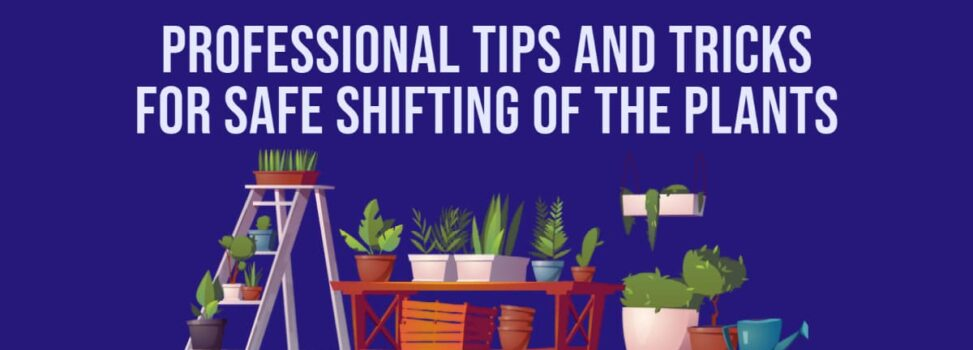 Professional Tips And Tricks For Safe Shifting of The Plants